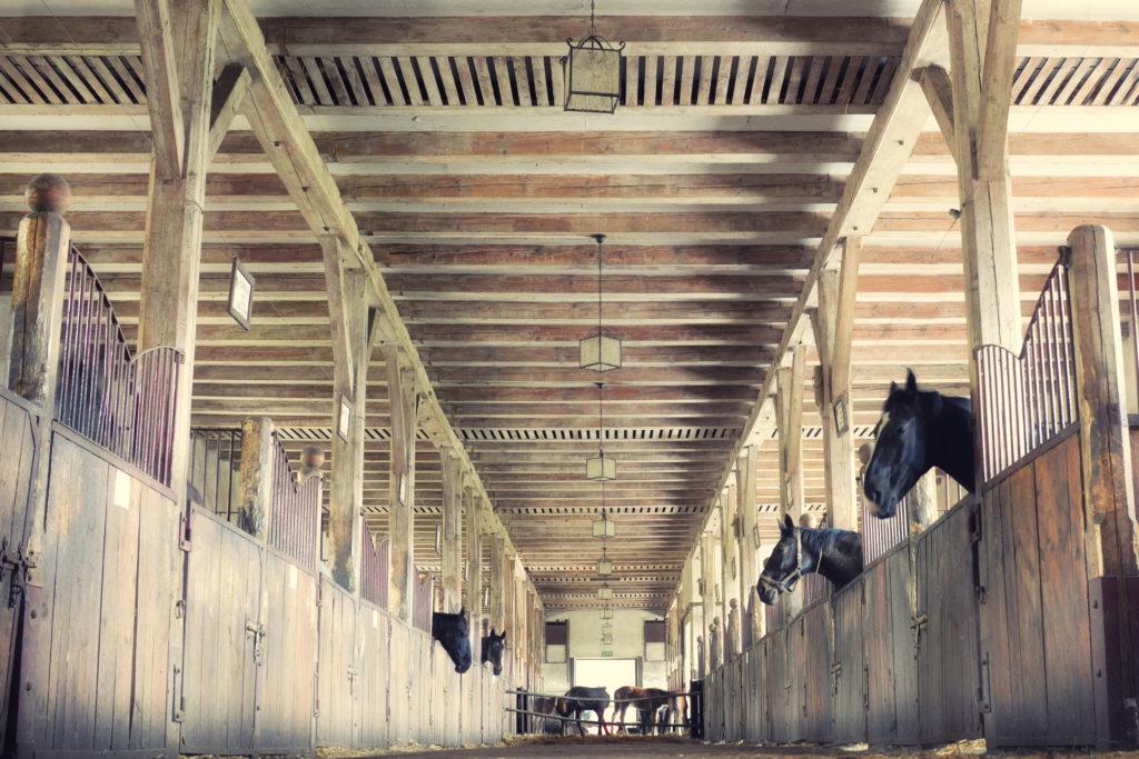 Wnętrze stajni, konie w boksach